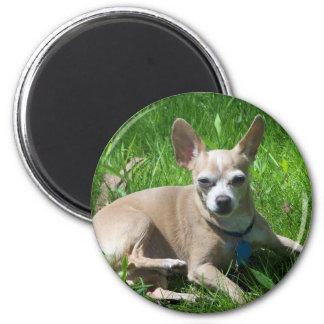 chihuahua 6 cm round magnet