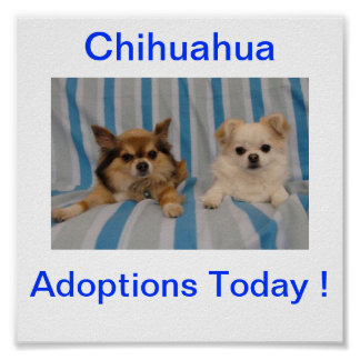 Chihuahua Adoption Today Sign