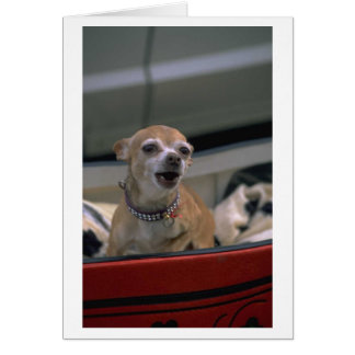 Chihuahua Barking Thank You Card