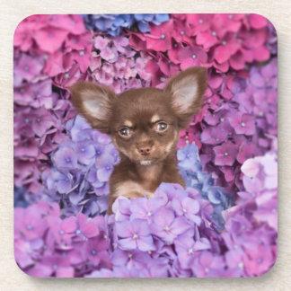 Chihuahua between flowers coaster