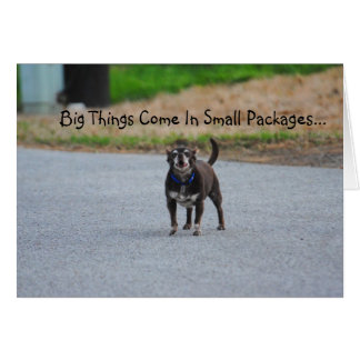 Chihuahua Big Things Come In Small Packages Card