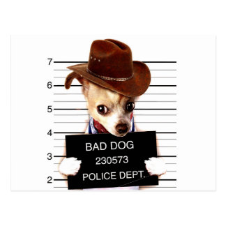 chihuahua cowboy - sheriff dog postcard