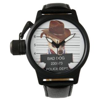 chihuahua cowboy - sheriff dog watch