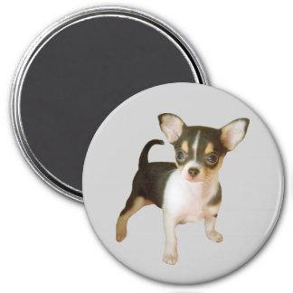 Chihuahua Cutie Magnet