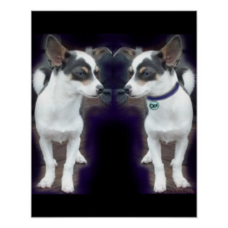 Chihuahua Dex reflection 16x20 print