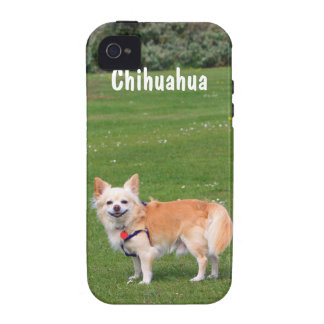 Chihuahua dog long-haired beautiful photo custom Case-Mate iPhone 4 covers