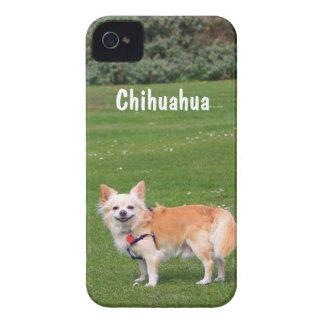 Chihuahua dog long-haired beautiful photo custom iPhone 4 Case-Mate case