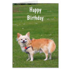 Chihuahua dog long-haired photo birthday card