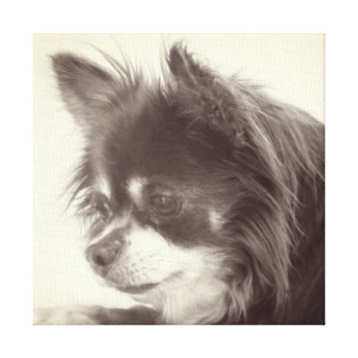 Chihuahua Dog Portrait Canvas Print