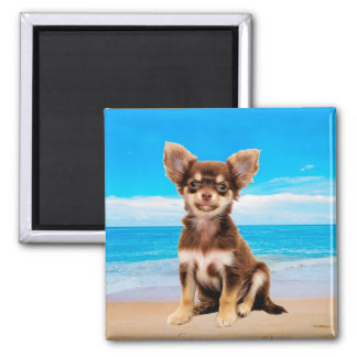 Chihuahua Dog Sitting on Tropical Beach Magnet