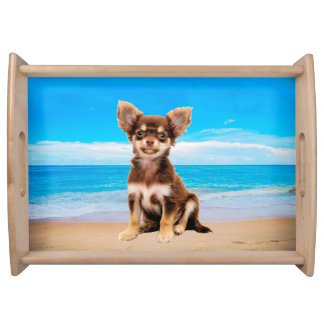 Chihuahua Dog Sitting on Tropical Beach Serving Tray