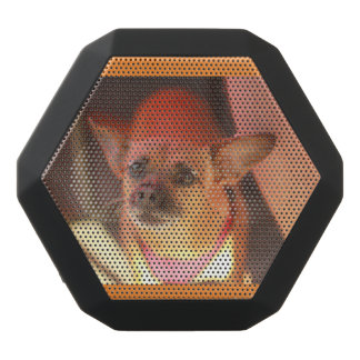 Chihuahua dog speaker portrait of dog