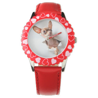 Chihuahua  dog  Tearing Through Watch