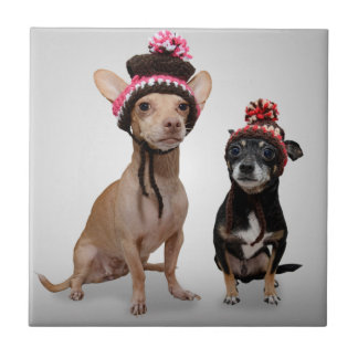 Chihuahua Dogs With Hats Photo Tile