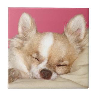 Chihuahua face tile