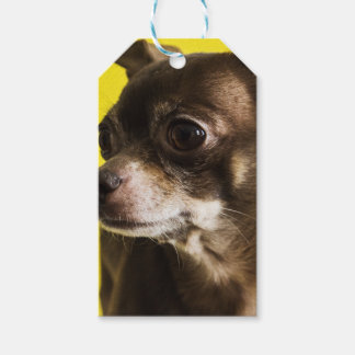 chihuahua gift tags