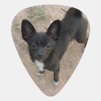 Chihuahua Guitar Pick