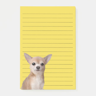 Chihuahua Illustrated Notes