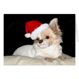 Chihuahua in a Santa Hat Card