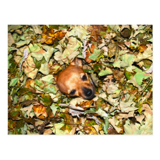 Chihuahua in Autumn Leaves Postcard