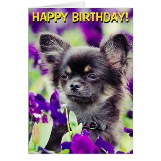 Chihuahua in flowers birthday card
