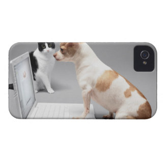 Chihuahua looking into the screen of a laptop iPhone 4 case