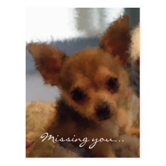 Chihuahua: Missing You Postcard
