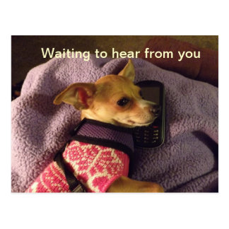 Chihuahua on phone Card