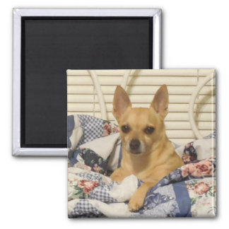Chihuahua Or Your Photo Magnet