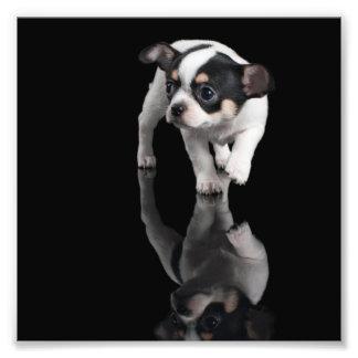 Chihuahua Photo Print