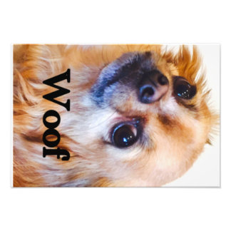 Chihuahua poster photographic print