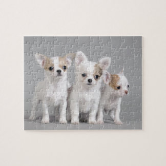 Chihuahua puppies jigsaw puzzle