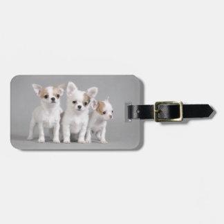 Chihuahua puppies luggage tag