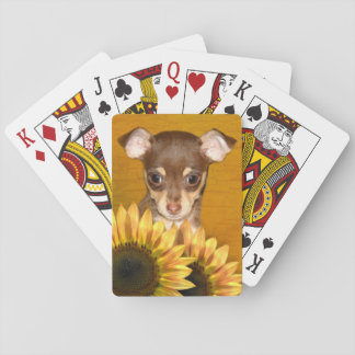 Chihuahua puppy and sunflowers playing cards