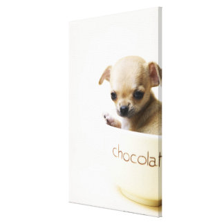 Chihuahua puppy in bowl (cropped) canvas prints