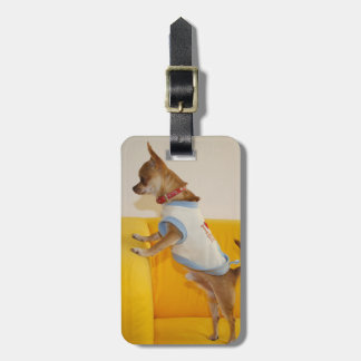 Chihuahua Puppy On Yellow Sofa Luggage Tag