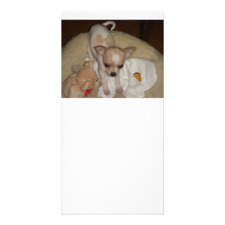 Chihuahua_puppy Personalized Photo Card