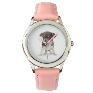 Chihuahua puppy standing of white background wrist watch