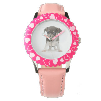Chihuahua puppy standing of white background wristwatch