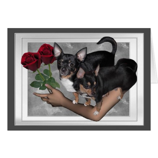 Chihuahua Roses Love Card