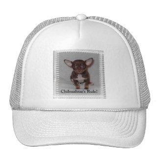 Chihuahua s Rule 1 Hat
