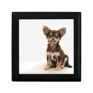 Chihuahua Small Dog Gift Box