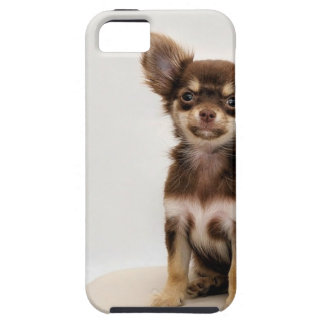 Chihuahua Small Dog iPhone 5 Cover
