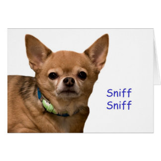 Chihuahua Sniff Birthday Card