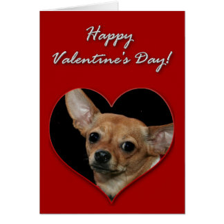 Chihuahua Valentines Day Card