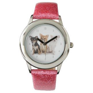 Chihuahua Watch