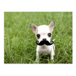 Chihuahua with Funny Moustache in Garden Postcard