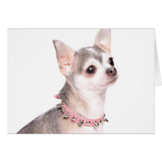 chihuahua with pink studded collar card
