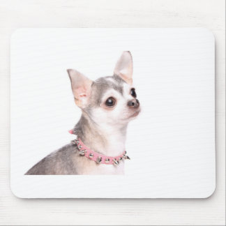 chihuahua with pink studded collar mouse pad