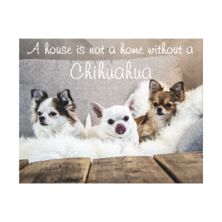Chihuahua Wrapped Canvas A House Is Not A Home